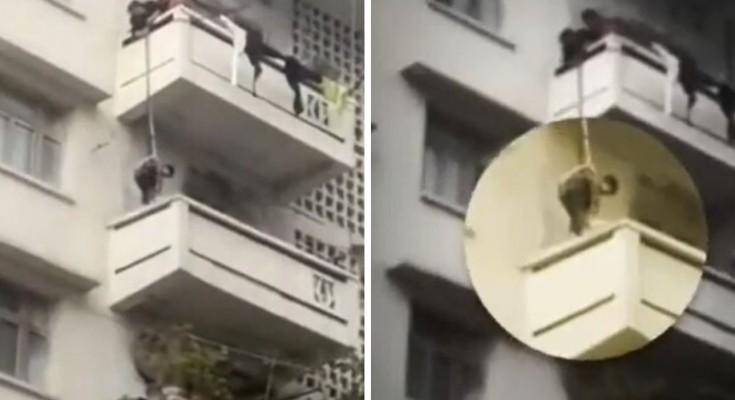Cat-Balcony-China
